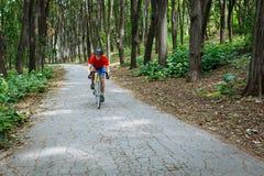 Um ciclista monta em uma bicicleta da estrada na estrada nas madeiras Foto de Stock Royalty Free