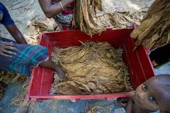 Um cigarro de medição do trabalhador do cigarro folheia em Dhaka, manikganj, Bangladesh Fotos de Stock Royalty Free