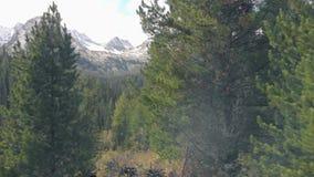 Um cinemático de neve suave e com tiro nas colinas, vista aérea, picos de montanhas nevadas Voando atrás de árvores ou pinheiros filme