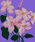 um clematis cor-de-rosa Imagens de Stock Royalty Free