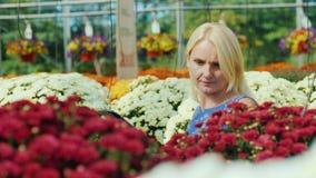 Um cliente novo escolhe flores no berçário Usa uma tabuleta filme