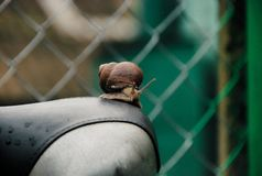 Um close up de um caracol foto de stock royalty free