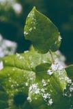 Um close-up de uma folha com flocos de neve fotos de stock