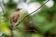 Um close up disparado de um pássaro marrom isolado ao descansar em uma árvore foto de stock royalty free