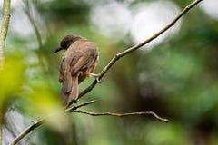 Um close up disparado de um pássaro marrom isolado ao descansar em uma árvore imagem de stock