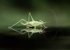 Um close up do inseto Foto de Stock