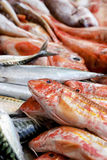 Um close-up dos peixes opõe-se Fotografia de Stock Royalty Free