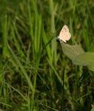 Um close up pequeno da borboleta fotos de stock