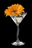 Um cocktail da margarida do gerbera Imagens de Stock Royalty Free