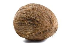 Um coco Fotos de Stock