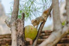 Um coco doce fotografia de stock