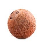 Um coco inteiro, delicioso Coco fresco próximo, em um fundo branco Do fruto tropical de Brown coco natural e fresco Fotos de Stock