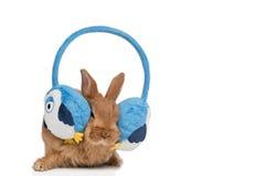 Um coelho com fones de ouvido Fotografia de Stock