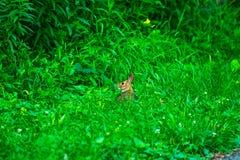 Um coelho selvagem e muito bonito foto de stock