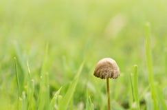 Um cogumelo Fotografia de Stock Royalty Free