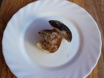 Um cogumelo congelado pequeno do cepa-de-bordéus na placa branca foto de stock