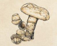 Um cogumelo do porcini Fotografia de Stock Royalty Free