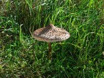 Um cogumelo entre a grama em um dia ensolarado Foto de Stock