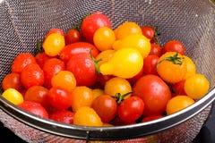 Um colander com tomates frescos Fotografia de Stock