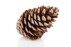 Um cone do pinho Fotografia de Stock Royalty Free