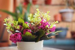 Um copo da flor cor-de-rosa colorida Foto de Stock Royalty Free