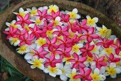 Um copo das flores Imagem de Stock