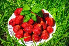 Um copo das morangos em um gramado verde Imagens de Stock Royalty Free