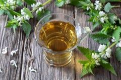 Um copo do chá branco da inoperante-provocação com inoperante-provocações frescas imagens de stock