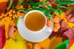 Um copo do chá perfumado no fundo das folhas de outono e de frutos caídos da maçã selvagem e do espinheiro cerval de mar fotografia de stock royalty free
