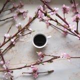 Um copo do coffe com flor de cerejeira foto de stock royalty free