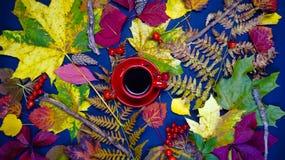 Um copo quente do chá cercado pelas folhas de outono O conceito de Imagem de Stock Royalty Free