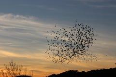 Um coração dos pássaros Imagem de Stock Royalty Free