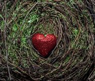 Um coração vermelho com um fundo do musgo Fotografia de Stock