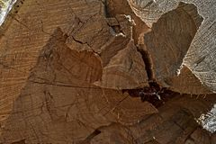 Um corte de uma árvore para um fundo 01 Fotografia de Stock Royalty Free