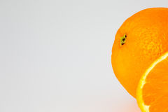 Corte a laranja com espaço da cópia Foto de Stock