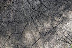 Um corte velho do tronco de árvore com anéis anuais Fotos de Stock