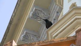 Um corvo preto empoleirado no exterior de uma construção filme