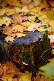 Um coto de árvore coberto com o líquene do musgo na queda sae A mudança das estações outono Imagens de Stock Royalty Free