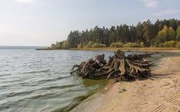 Um coto de árvore na costa de um lago Foto de Stock