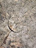 Um coto de árvore velho mostra as quebras e as fraturas que irradiam do centro que resultaram da resistência natural de ser l imagem de stock