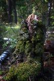 Um coto musgo-coberto só em uma paisagem pitoresca natural da floresta densa Lugar misterioso Fotos de Stock