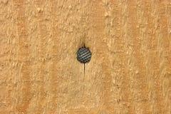 Um cravo martelado na placa imagem de stock