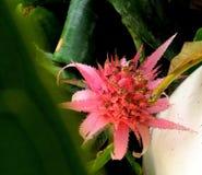 Um crescimento de flor selvagem cor-de-rosa bonito na terra imagens de stock