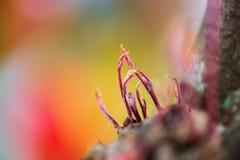 Um crescimento novo do botão da flora na parte 9 da natureza fotografia de stock