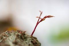 Um crescimento novo do botão da flora na parte 5 da natureza imagem de stock