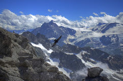 Um croaw no topo do mundo Fotografia de Stock