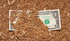 Um dólar no trigo imagem de stock