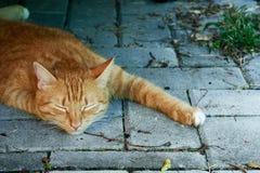 Um descanso do gato doméstico fotografia de stock