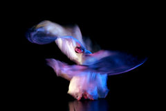 Um desempenho bonito da dança, efeito do borrão de movimento Fotografia de Stock