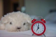 Um despertador com a boneca branca bonito do cão na cama na manhã Fotografia de Stock